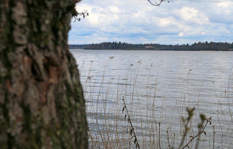 Mälaren med en trädstam i förgrunden.