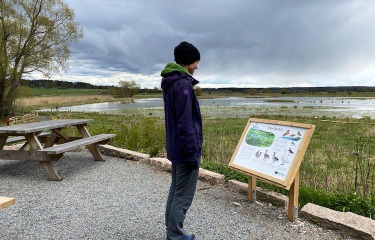 En man står på en grusad rastplats och tittar på en informationstavla. Framför rastplatsen är det våtmark.