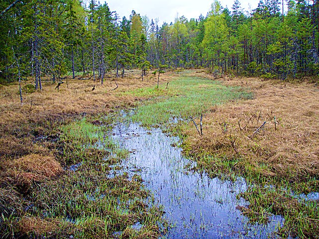 Smal remsa med öppet vatten mitt i ett myrområde.