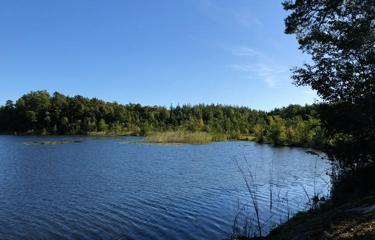 Dammstakärret med grön växtlighet runt omkring.