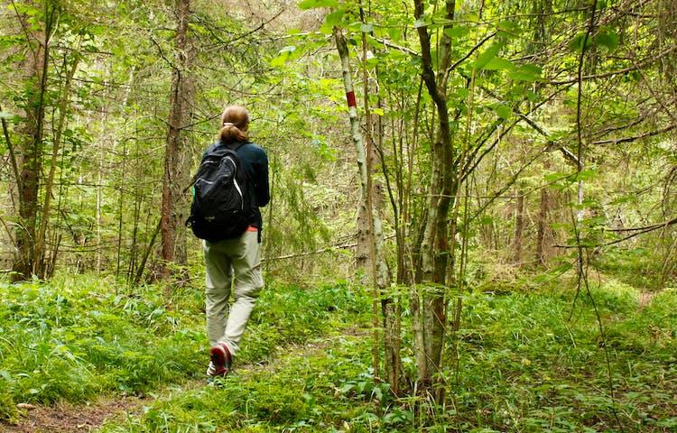 En kvinna med ryggsäck går på en stig genom skogen.