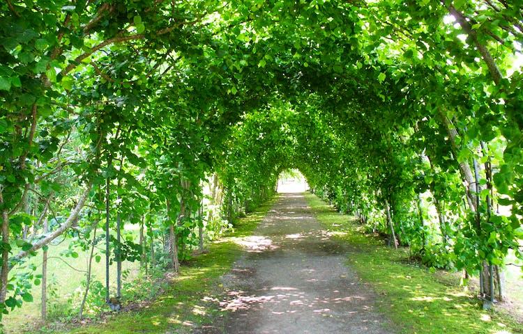 Allé där träd växer i en båge över vägen vid Ängsö slott.