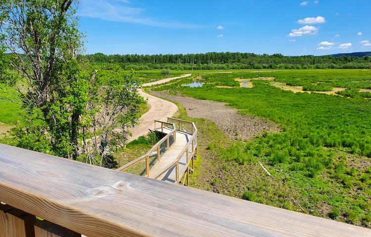 Klarblå himmel och grönt gräs, utsikt över Stadssjöns vandringsled