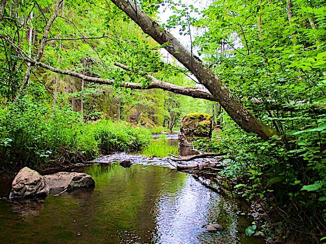 Hedströmmen med skog på sidorna och stenar i vattnet.