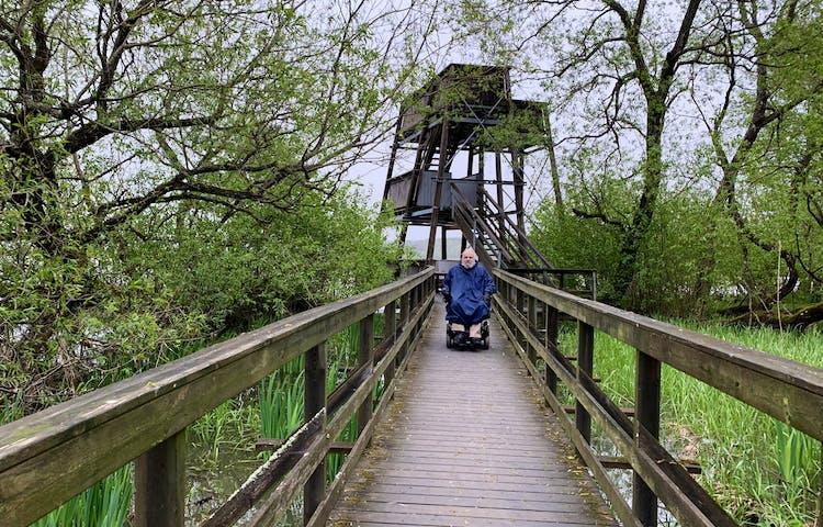 Träspång till fågeltornet, en man kör rullstol mot kameran