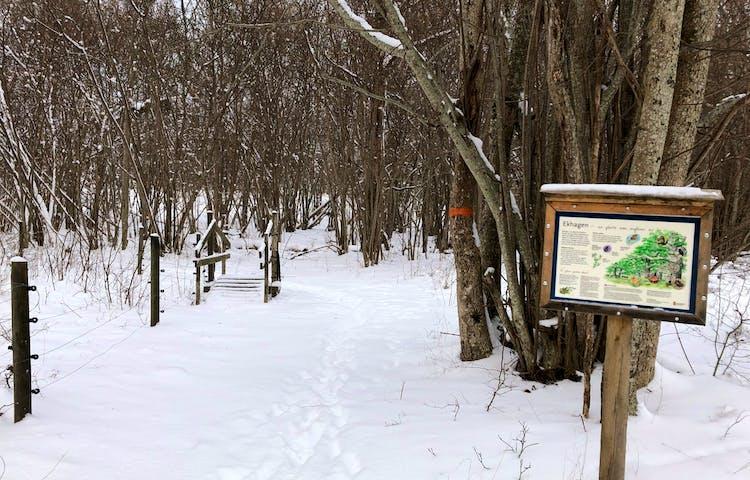 Ådö-Lagnöleden om vintern. Foto Miguel Jaramillo