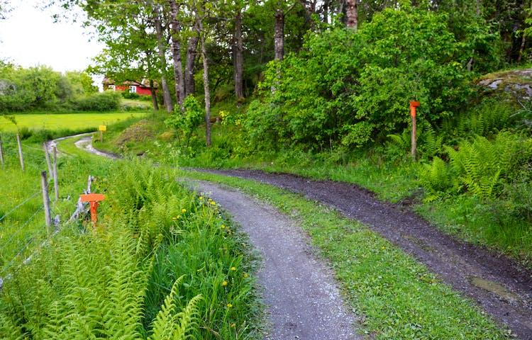 Traktorväg med stolpar med orange pilar på båda sidor av vägen.