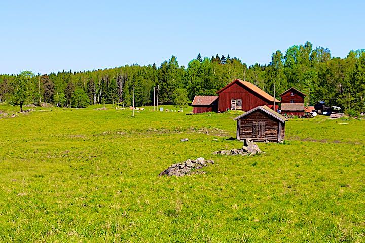 En öppen betesmark. I bakgrunden syns några röda byggnader.
