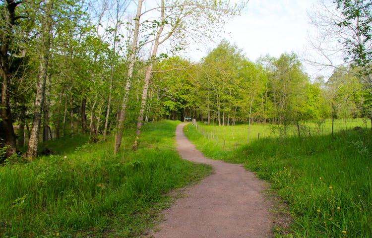 Grusad stig som går mellan skog och en hage.