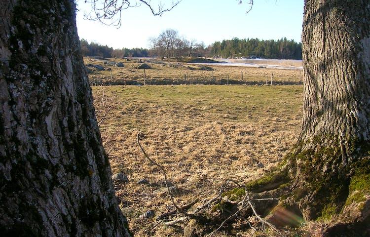 Mellan två grova trädstammar syns en strandäng med staket runt. I bakgrunden finns det skog, vass och istäckt vattendrag.