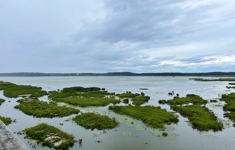 Ett tiotal små gräsklädda öar inne i en vik.