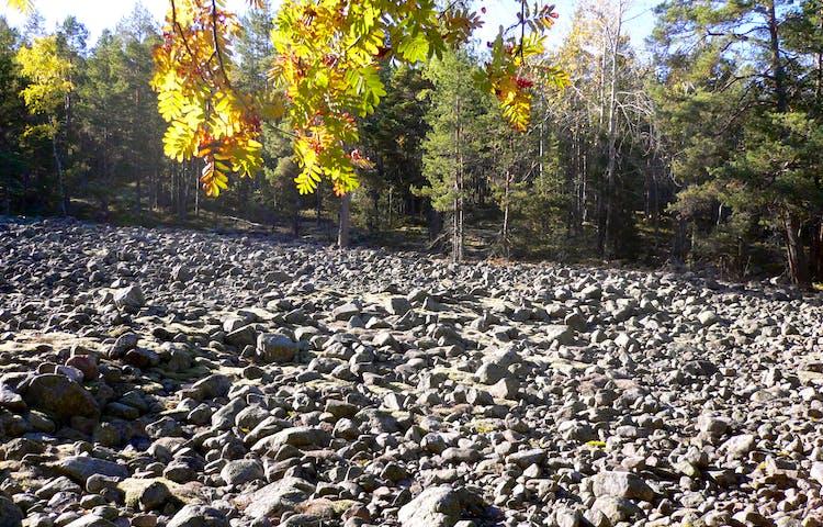 En stor, öppen och mycket stenig yta omgiven av skog.