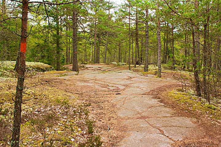 En stenhäll med många träd. På ett av trädstammarna finns en orange markering för Upplandsleden.