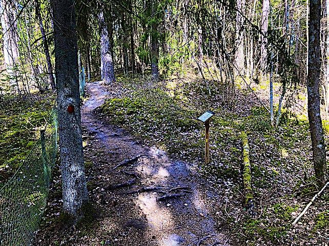 Informationstavla längs med stig med rötter och stenar.