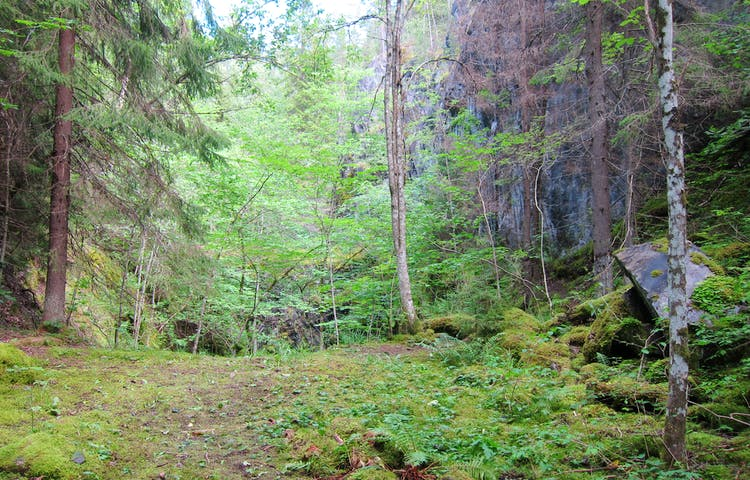 Skogsglänta med berg i bakgrunden.