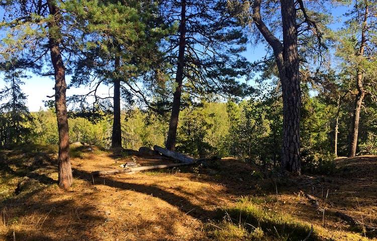 Solig glänta kantad av barrträd. På marken en enkel eldstad och två kullfallna stockar.