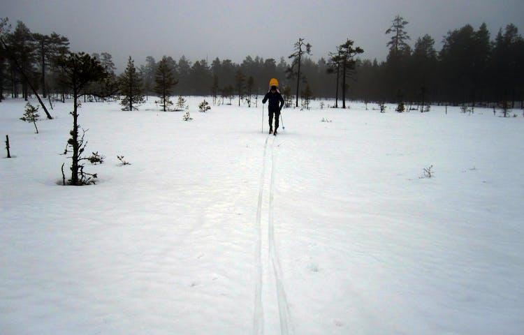 En person åker längdskidor.