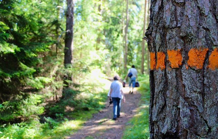 En ledmarkering är målad på en tall. Två människor går på en bred skogsstig.