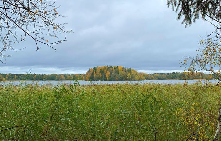 Höst i Hasselhorns naturreservat. Foto: Lena Malmström