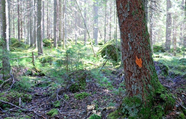 Orange punkt på träd.