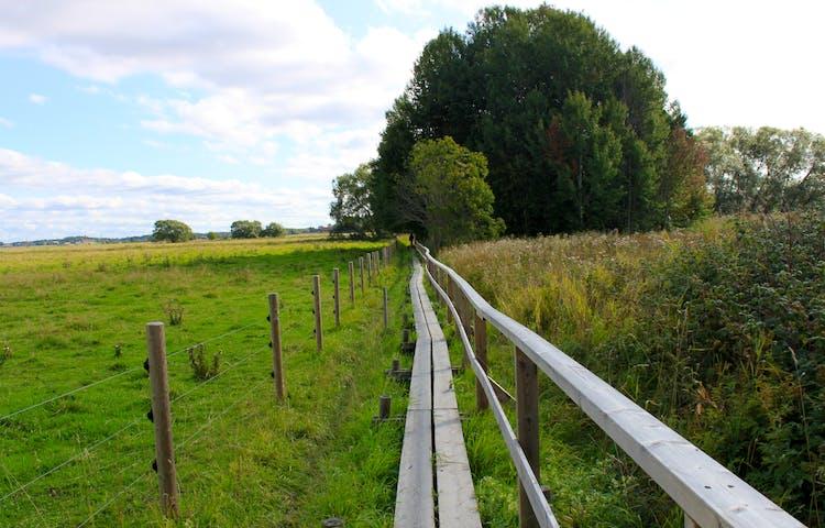 En smal träspång med handräcke på ena sidan går längs med ett staket. På andra sidan staketet är det en gräshage.