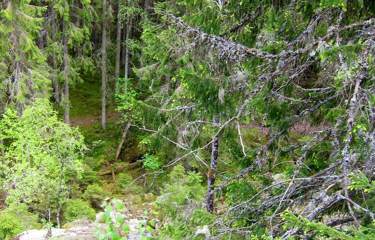 Vy över skogen från berget.
