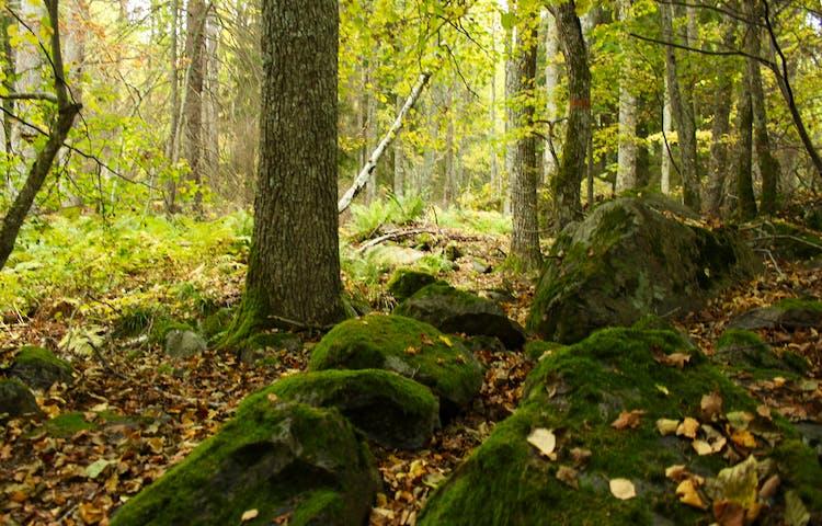 Blandskog med ojämn och mycket stenig mark.