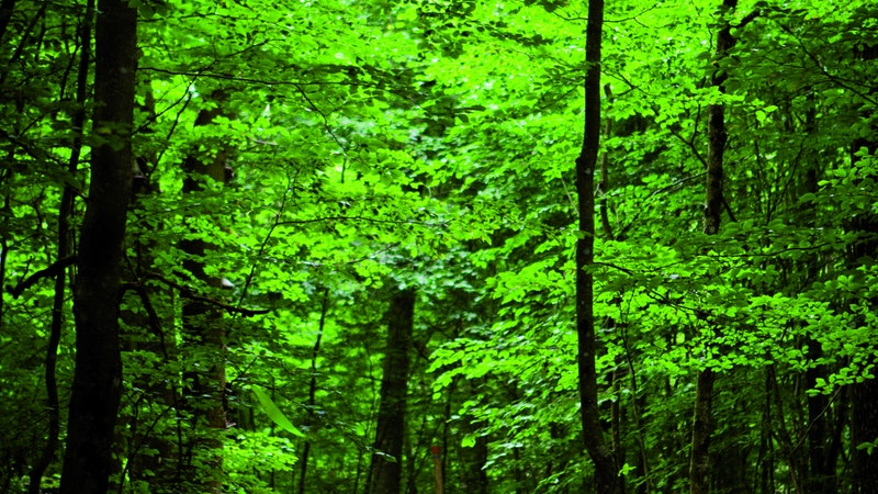 Bokskogsslingan och Lövåsslingan i Borgvik