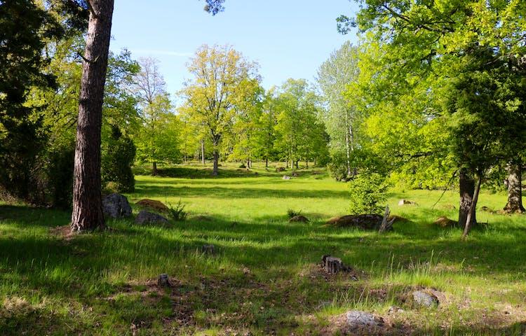 Gräsbevuxen glänta i skogen.