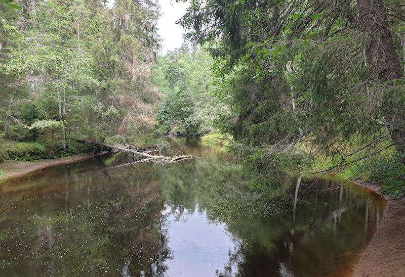 Skinnskatteberg - Ormdalsslingan