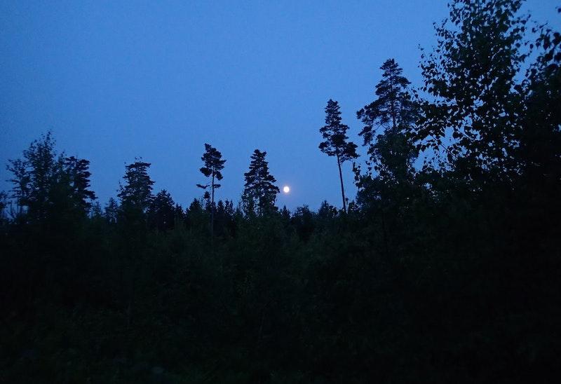 Överlevnad i skogsmiljö