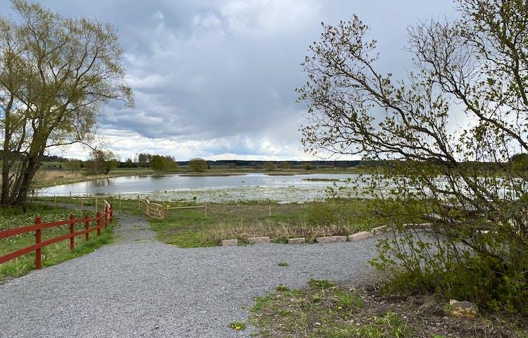 En jämn, bred grusgång går längs med utkanten av en våtmark. Trästaket står på båda sidorna av gången. Det är gott om vatten i våtmarken.