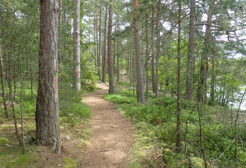 Skogsslingan