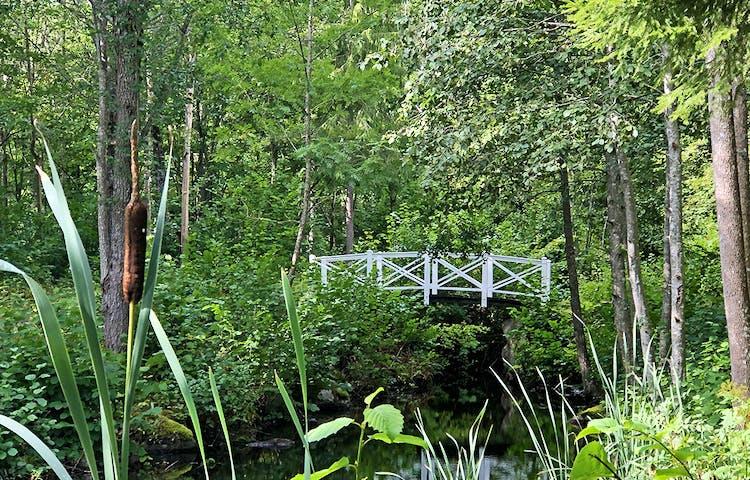 Vit träbro i grönskande skog.
