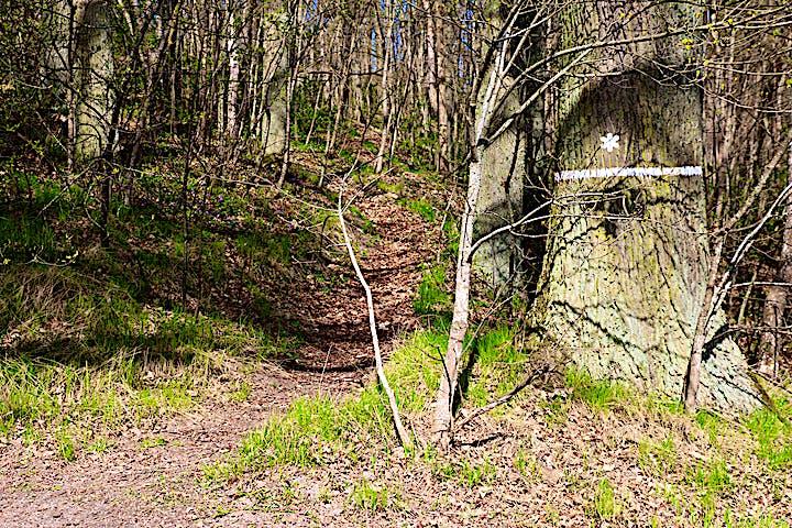 Vit markering på träd som visar att det är ett naturreservat.