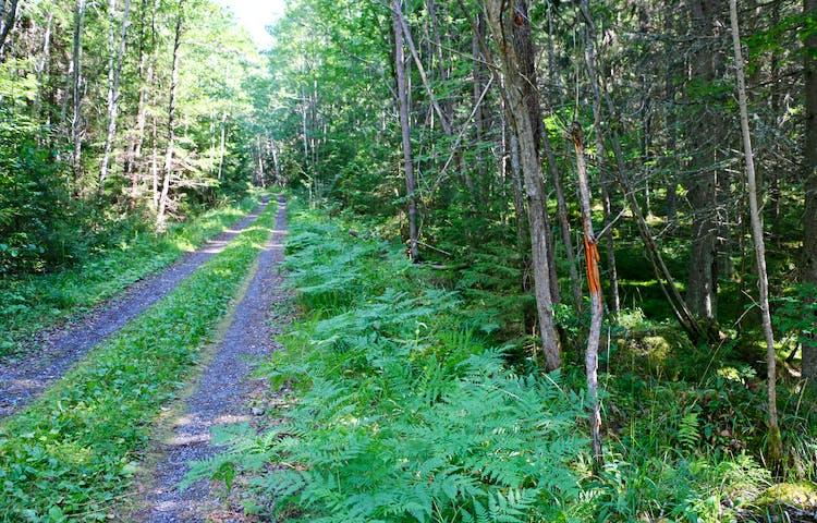 Skogsbilväg och orange markering på träd.