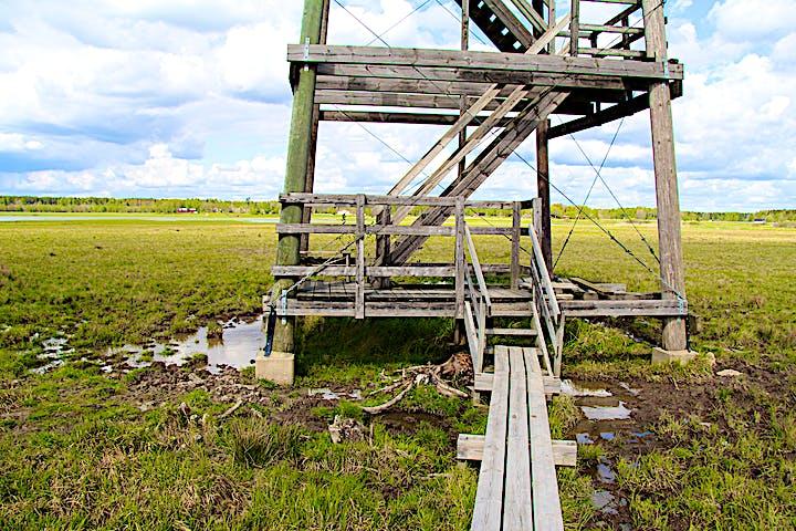 Spången och uppgången till fågeltornet.