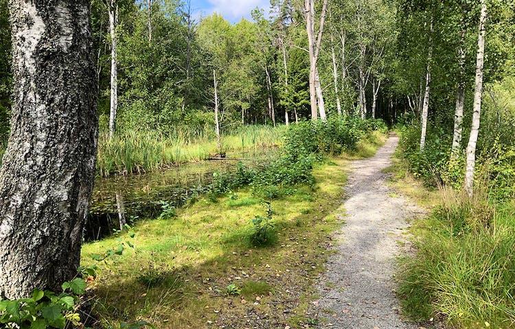 Grusad stig längs med kanal.