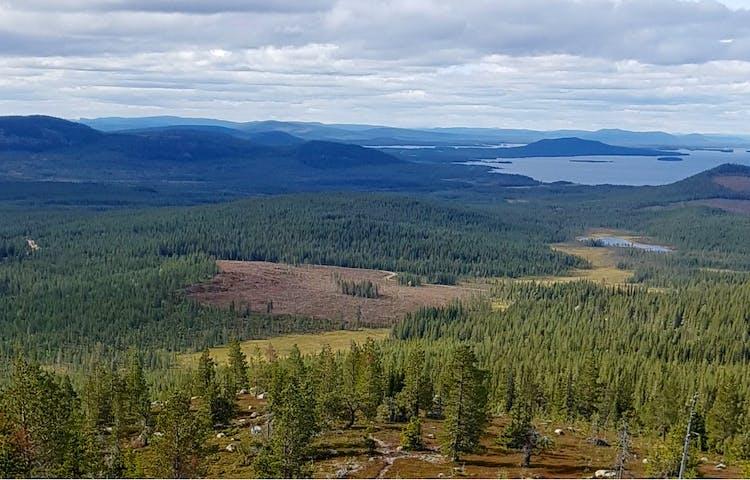 En stig genom lågvuxen barrskog med utsikt över berg och dalar. Foto.