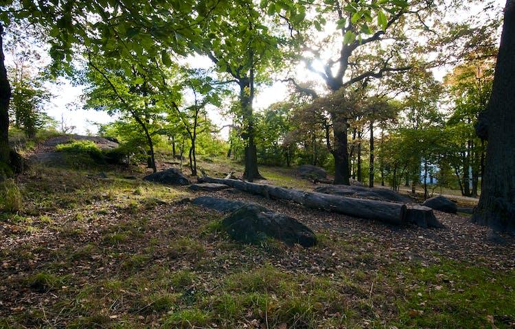 Ekar i Luma park