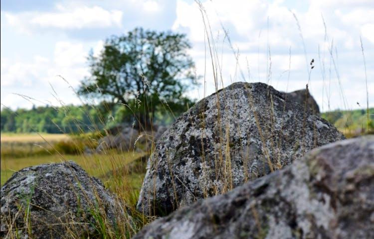 Tre stora stenar ligger på en ängsmark