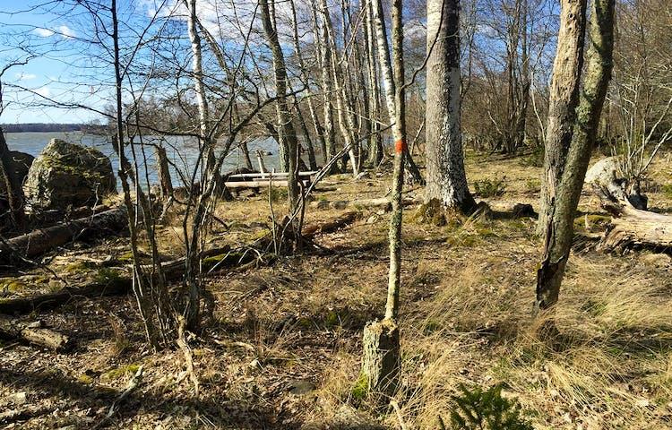 Orange prick på träd i förgrunden, bakom ett picknickbord vid strandkanten.