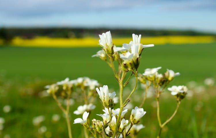 Blomsterprakt, Foto Birgitta Oloffson