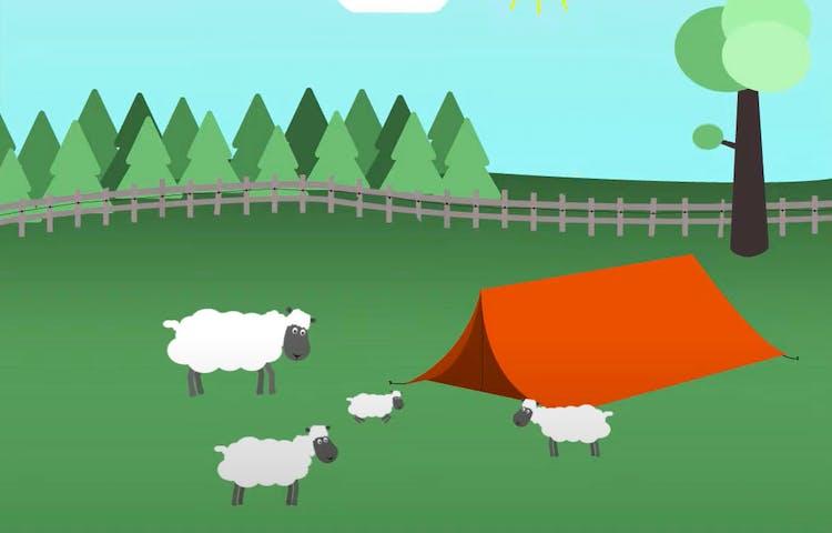 Tält i en fårhage