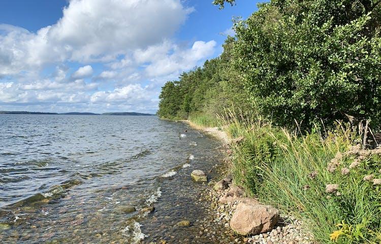 Vacker strandlinje i Adelsö-Sättra. Foto Lena Malmström
