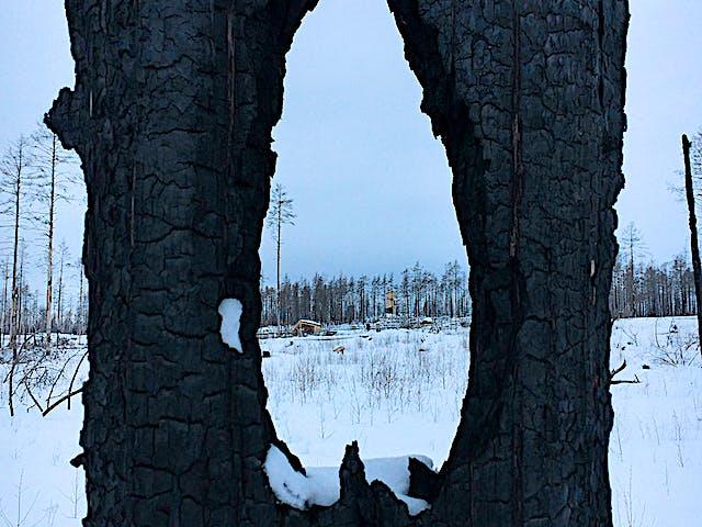 Grävlingsberget med dess anläggingar syn i bakgrunden, i förgrunden en bränd stam med hål i.