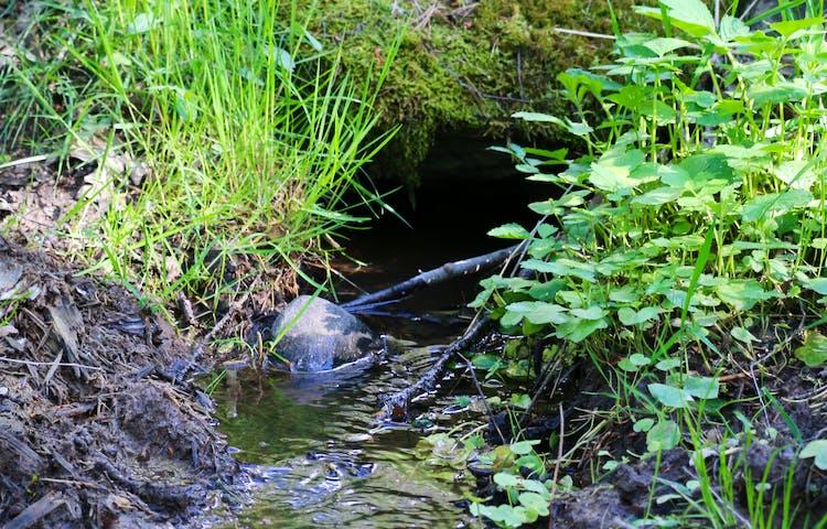 Vatten i en hålighet under marken. Runtikring växer frodigt gräs.