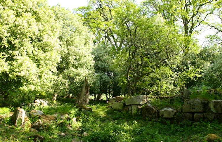 Träd på våren i en hage, ett träd med vita blommor. En stengrund till höger i bilde.