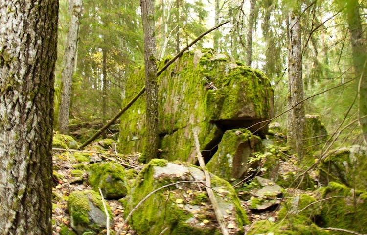 Mitt i skogen står ett stort stenblock omgiven av mindre stenblock.