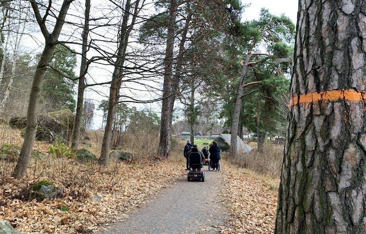 Tallstam med orange ledmarkering och några som åker rullstol på den hårdgjorda stigen i bakgrunden.